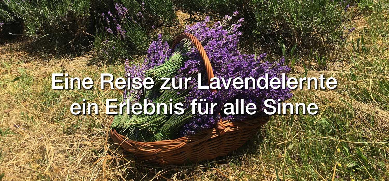 http://www.via-mea.com/Repository/Banners/Lavendelernte-banner-large-DE.jpg