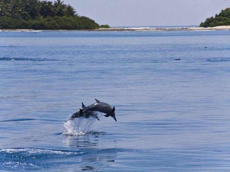 Wandern auf der Insel der Delphine-Lošinj