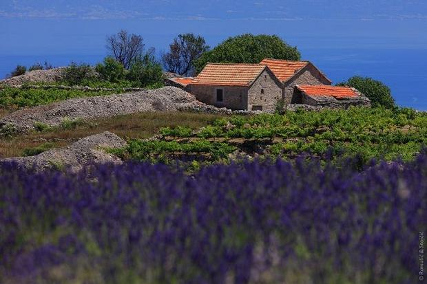 The fragrances of Dalmatia