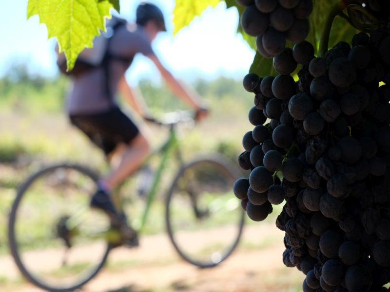 Istra bike