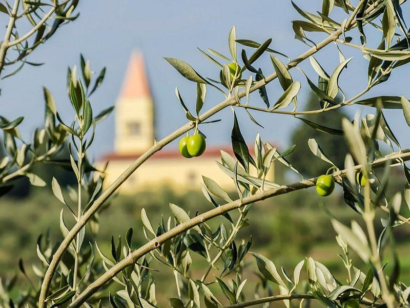 Frühling und Herbst in Istrien