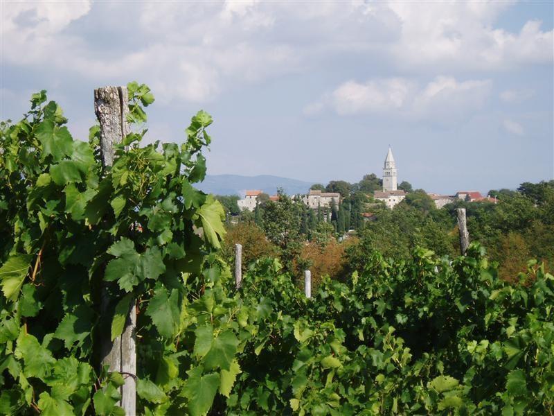 winetrail 0 5